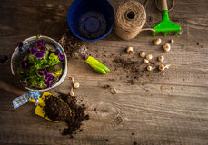 Plantas para a plantação e os acessórios do jardim Imagens de Stock