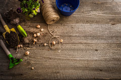 Plantas para a plantação e os acessórios do jardim Imagem de Stock Royalty Free