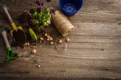 Plantas para replantar y los accesorios del jardín Fotografía de archivo libre de regalías