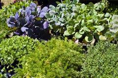 Plantas para a venda Foto de Stock Royalty Free