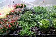 Plantas para a venda no mercado Imagem de Stock Royalty Free