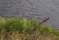 Plantas pelo rio Fotos de Stock Royalty Free