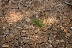 Plantas pequenas Imagens de Stock