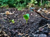 Plantas pequenas Fotografia de Stock