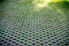 Plantas pequenas abstratas da natureza no teste padrão de grade Fotos de Stock Royalty Free