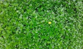 Plantas pequenas bonitas verdes imagem de stock