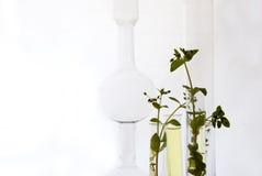 Plantas pequenas nas câmaras de ar de teste Imagens de Stock