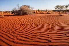 Plantas pequenas no deserto da Austrália Ocidental Fotos de Stock