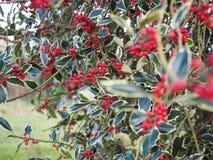 Plantas pequenas vermelhas do jardim de Kew na manhã Fotografia de Stock