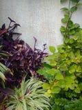 Plantas perto de uma parede No jardim Foto de Stock Royalty Free