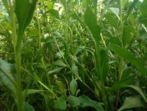 Plantas Stock Image