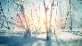 Plantas pontudo e queda de neve Fotografia de Stock