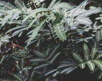 Plantas populares Fotografia de Stock