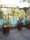 Plantas por la piscina Fotografía de archivo libre de regalías