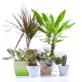 Plantas Potted Imagen de archivo
