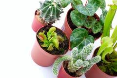 Plantas Potted Imagens de Stock