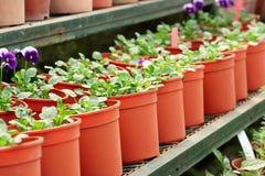 Plantas Potted imagem de stock royalty free