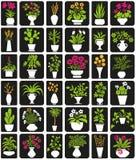 Plantas Potted Imagem de Stock