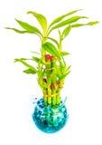 Plantas Potted Fotografia de Stock Royalty Free