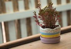 Plantas Potted Foto de Stock Royalty Free