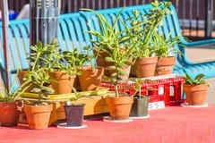 Plantas Potted Fotos de archivo libres de regalías