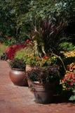 Plantas Potted coloridas Imagens de Stock Royalty Free