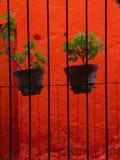 Plantas Potted en fondo brillante Foto de archivo libre de regalías