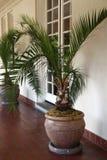 Plantas potted tropicais Imagens de Stock Royalty Free
