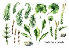 Plantas prehistóricas fijadas Ejemplo dibujado mano de la acuarela, aislado en el fondo blanco