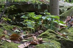 Plantas que brotam de uma rocha fotografia de stock royalty free