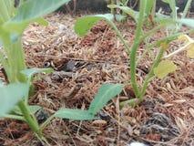 Plantas que crecen del suelo Foto de archivo libre de regalías