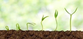 Plantas que crecen del suelo - progreso de la planta Fotografía de archivo libre de regalías