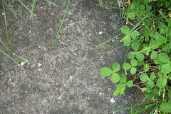 Plantas que crecen entre el pavimento concreto Fotografía de archivo
