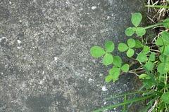Plantas que crecen entre el pavimento concreto Foto de archivo libre de regalías