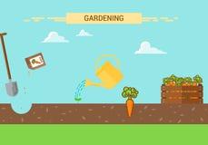 Plantas que crecen infographic con el proceso de establecimiento de la zanahoria Cuatro etapas de crecimiento Fotografía de archivo libre de regalías