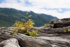 Plantas que crescem do log imagens de stock royalty free