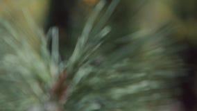 Plantas que crescem em um jardim botânico video estoque
