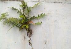 Plantas que crescem entre quebras da parede imagens de stock royalty free