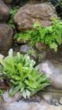 Plantas que crescem na parede da rocha fotos de stock royalty free