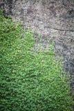Plantas que crescem na rocha Imagem de Stock Royalty Free