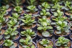 Plantas que crescem nas vagens Foto de Stock Royalty Free