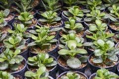 Plantas que crescem nas vagens Imagem de Stock Royalty Free