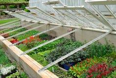 Plantas que crescem nos frames de vidro fotografia de stock