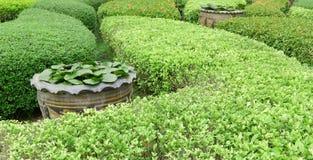 Plantas que cultivan un huerto verdes al aire libre del primer en parque Foto de archivo