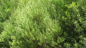 Plantas que fundem no vento video estoque