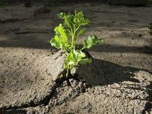 Plantas que intentan sobrevivir - a través de las cubiertas humanas imagen de archivo libre de regalías
