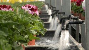 Plantas que molham na opinião industrial da estufa filme