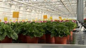 Plantas que molham no vídeo industrial da estufa vídeos de arquivo