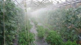 Plantas que son regadas en un invernadero metrajes