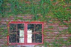 Plantas que suben en de madera viejo con la ventana roja Imagen de archivo